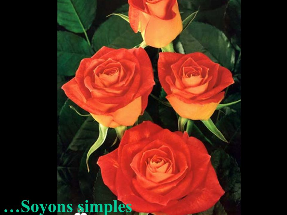 …Soyons simples