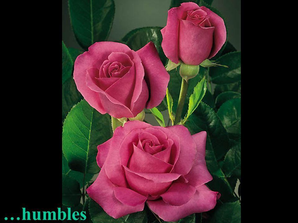…humbles