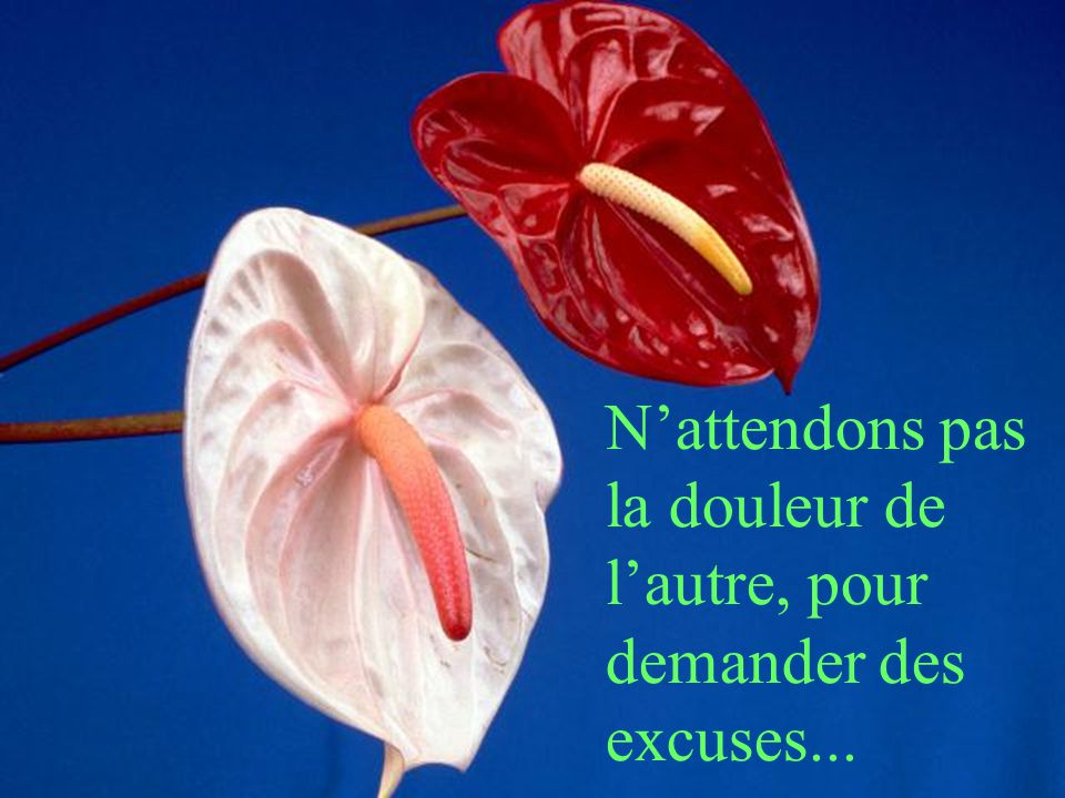 N'attendons pas la douleur de l'autre, pour demander des excuses...
