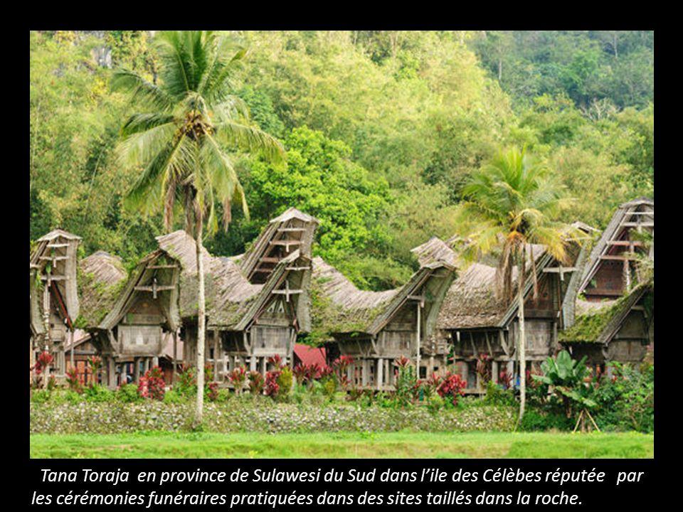 Tana Toraja en province de Sulawesi du Sud dans l'ile des Célèbes réputée par les cérémonies funéraires pratiquées dans des sites taillés dans la roche.
