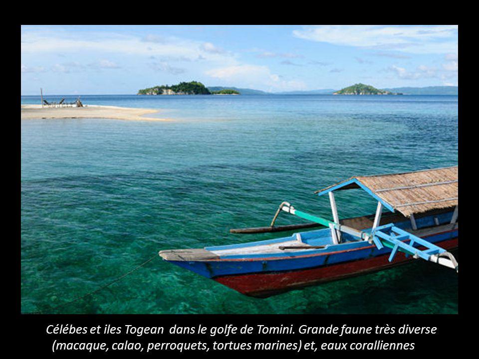 Célébes et iles Togean dans le golfe de Tomini