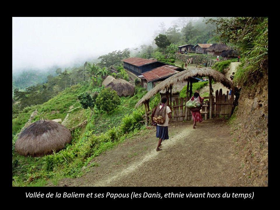 Vallée de la Baliem et ses Papous (les Danis, ethnie vivant hors du temps)