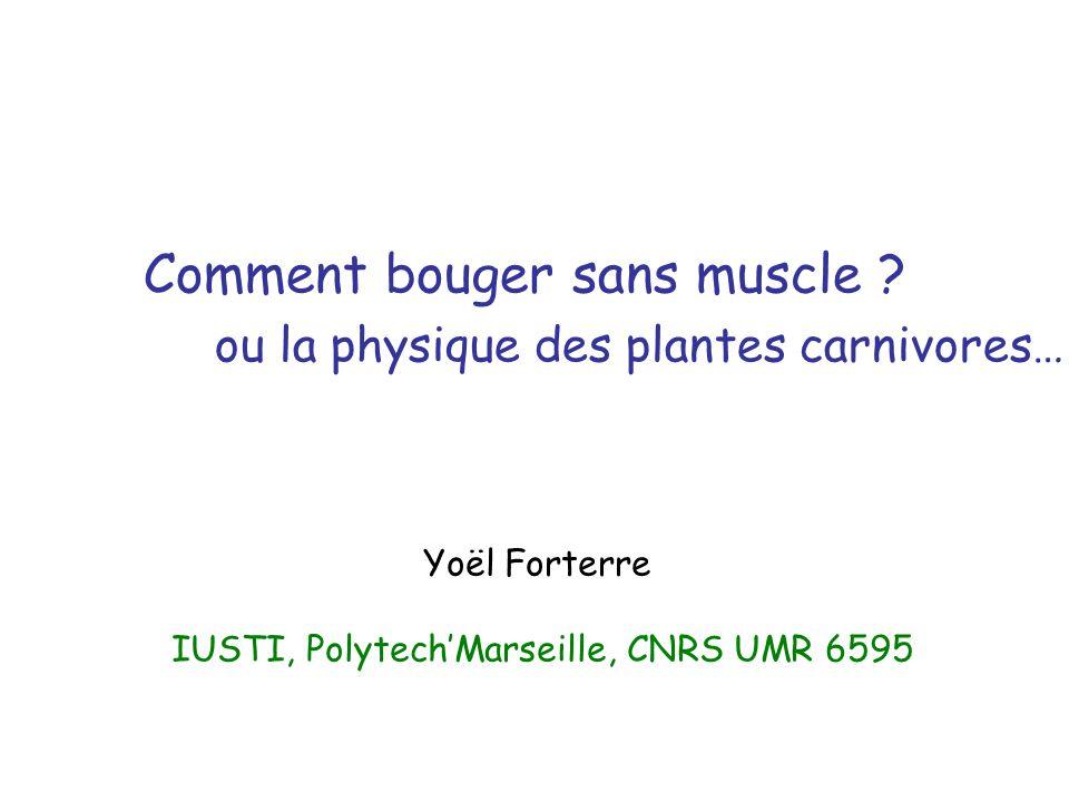 IUSTI, Polytech'Marseille, CNRS UMR 6595