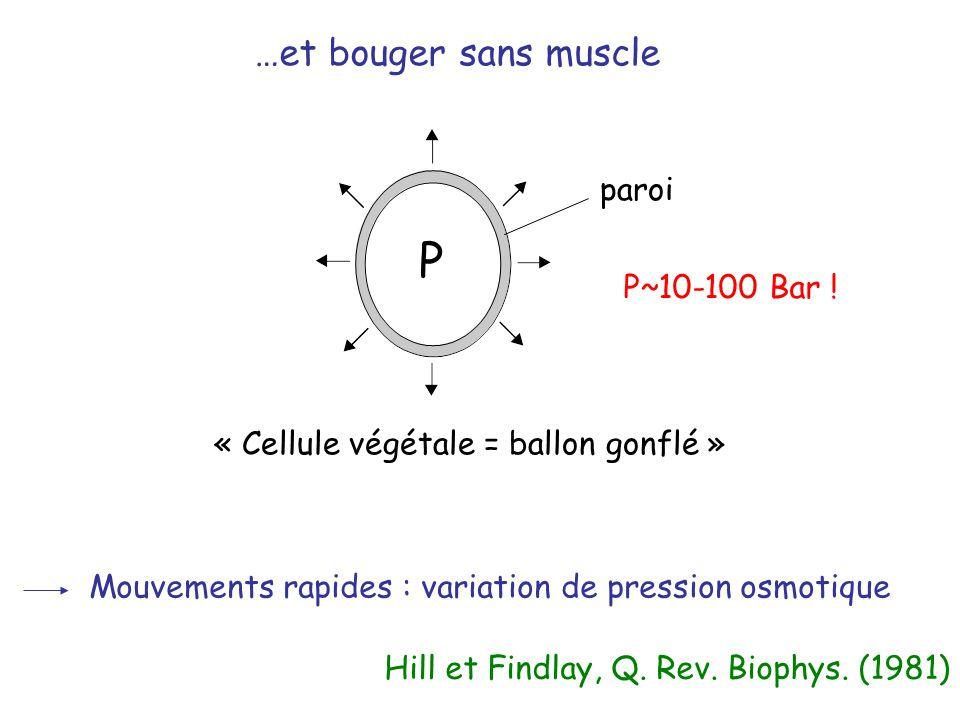 P …et bouger sans muscle paroi P~10-100 Bar !