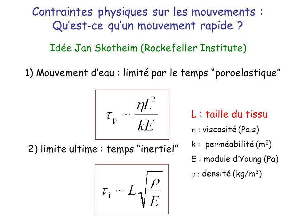 Contraintes physiques sur les mouvements :