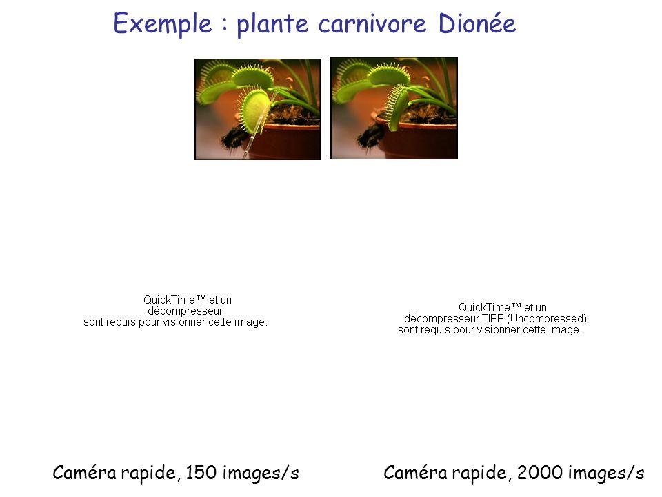 Exemple : plante carnivore Dionée