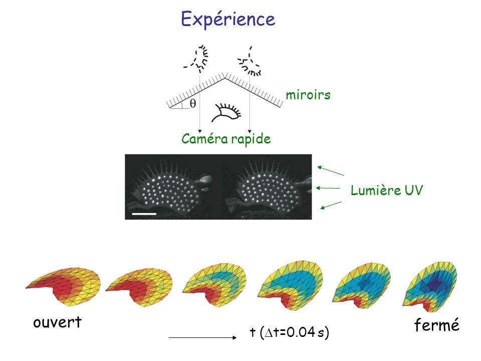 Expérience miroirs Caméra rapide Lumière UV ouvert fermé t (Dt=0.04 s)
