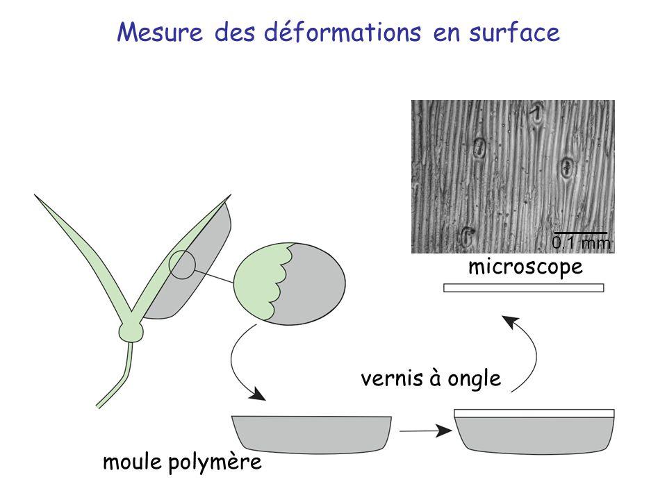Mesure des déformations en surface