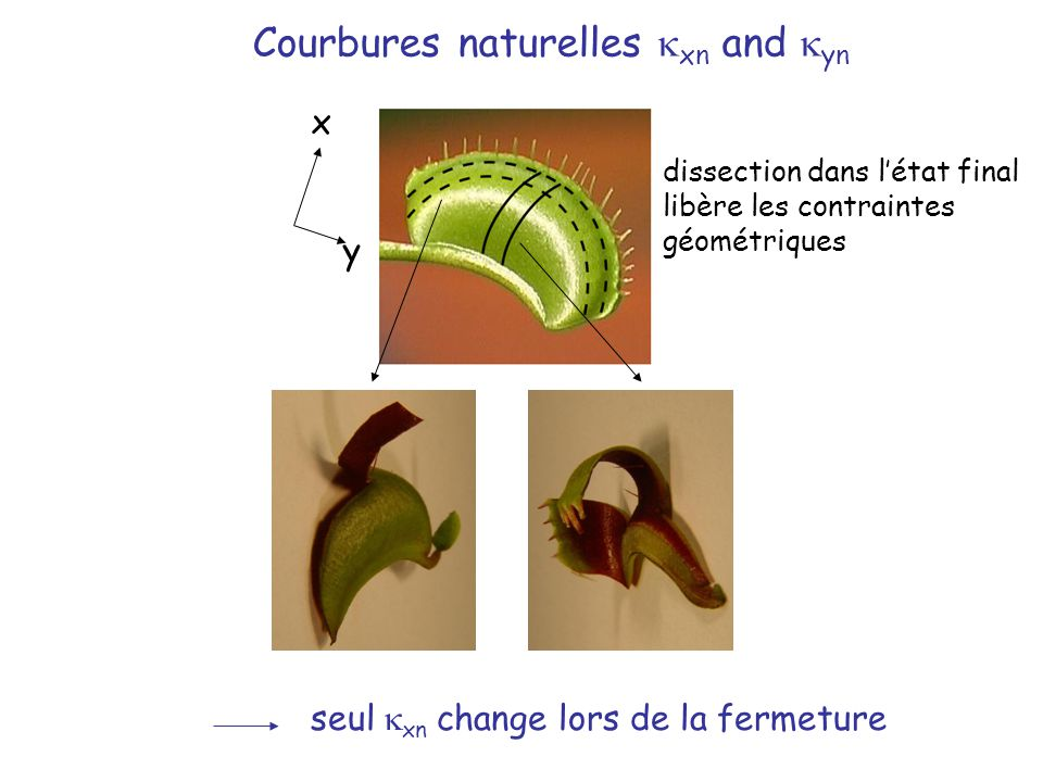 Courbures naturelles kxn and kyn