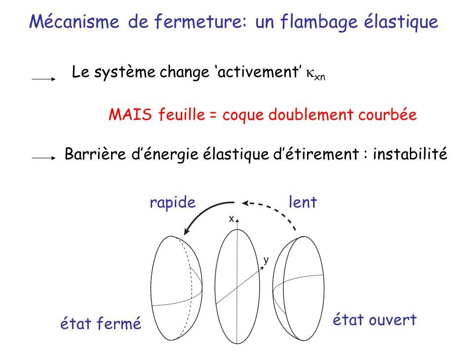 Mécanisme de fermeture: un flambage élastique