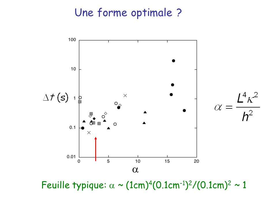 Une forme optimale a Feuille typique: a ~ (1cm)4(0.1cm-1)2/(0.1cm)2 ~ 1