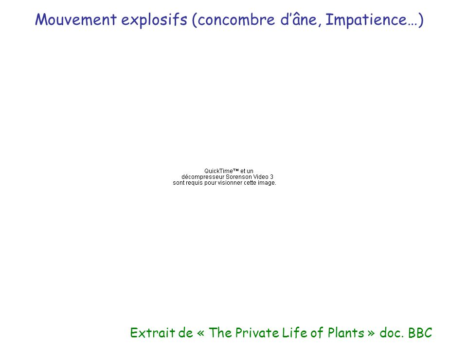 Extrait de « The Private Life of Plants » doc. BBC