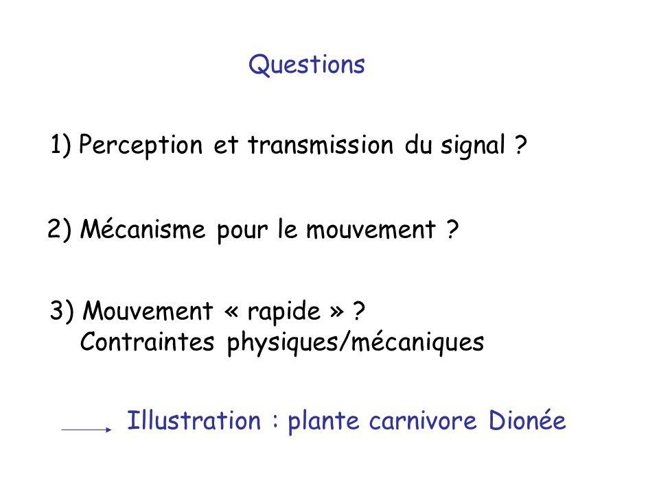 Questions 1) Perception et transmission du signal 2) Mécanisme pour le mouvement 3) Mouvement « rapide »