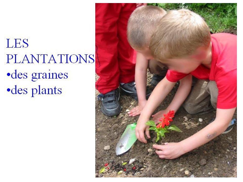 L 'étape suivante permet aux élèves de mettre en terre ce qu 'ils avaient semé en classe, mais aussi de planter des graines qu 'ils ont trouvé et qu 'ils ne connaissent pas et puis des plants ou graines apportés de la maison