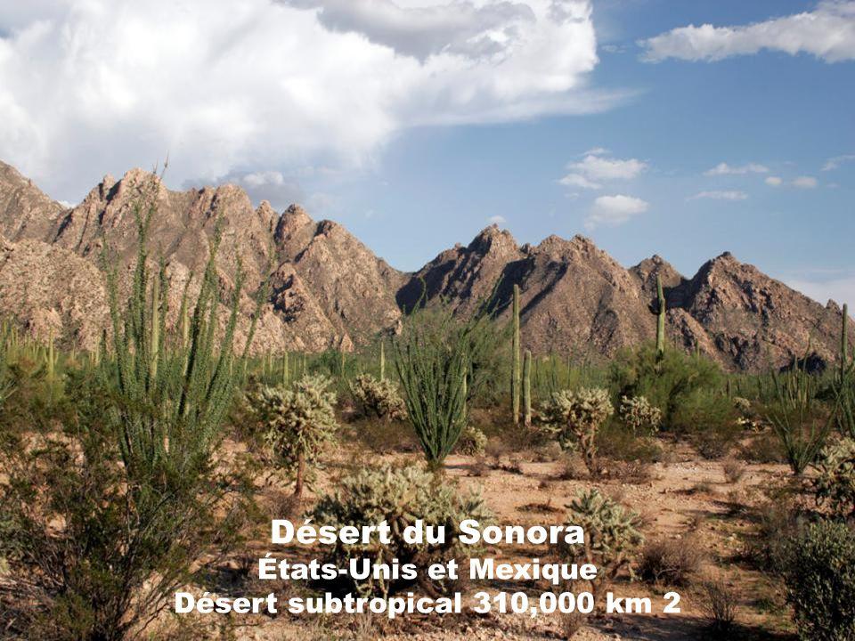 Désert du Sonora États-Unis et Mexique Désert subtropical 310,000 km 2