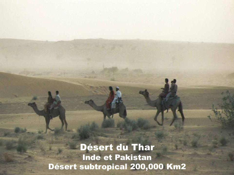 Désert du Thar Inde et Pakistan Désert subtropical 200,000 Km2