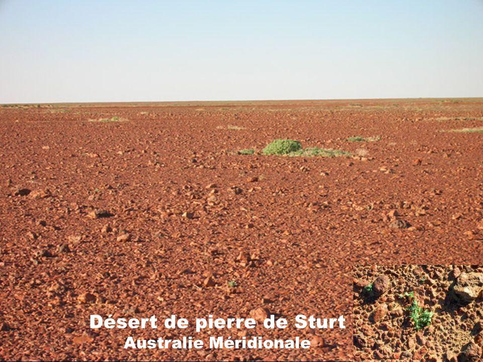 Désert de pierre de Sturt Australie Méridionale
