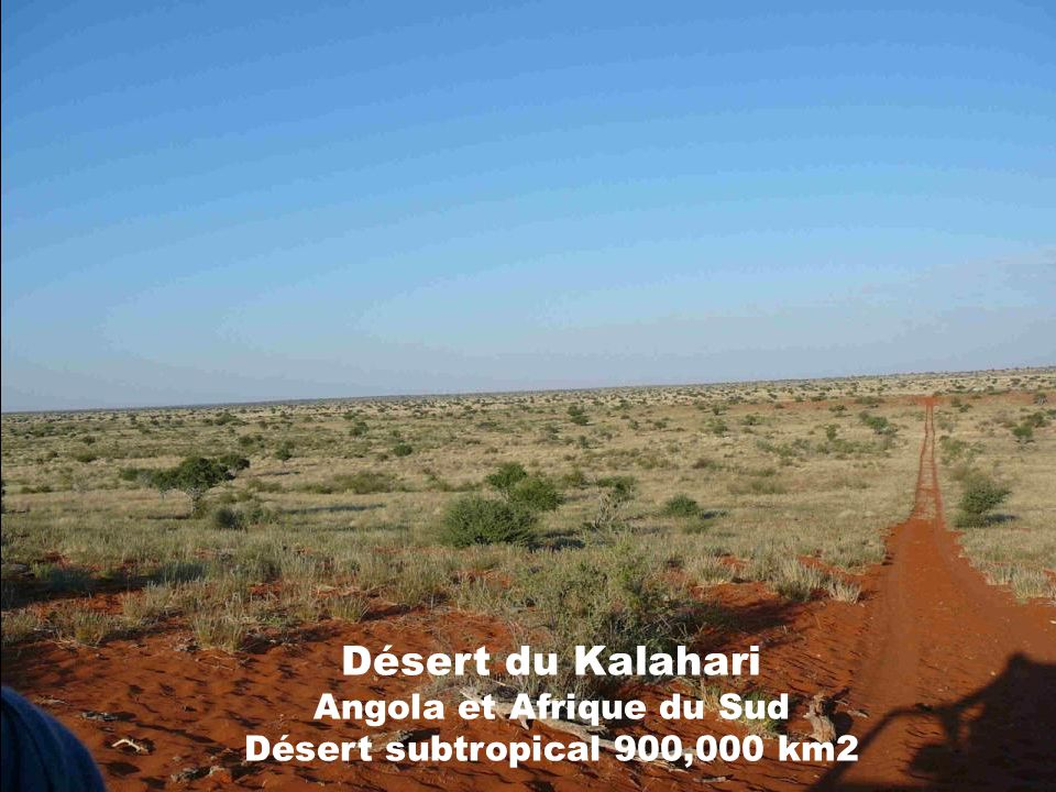 Désert du Kalahari Angola et Afrique du Sud Désert subtropical 900,000 km2