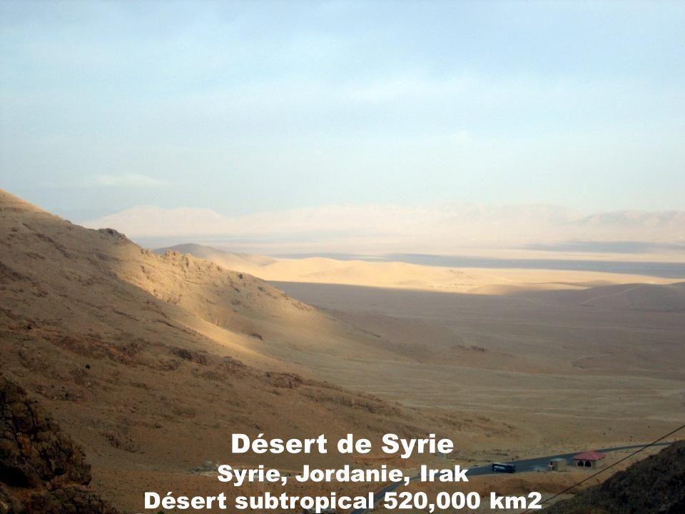Désert de Syrie Syrie, Jordanie, Irak Désert subtropical 520,000 km2