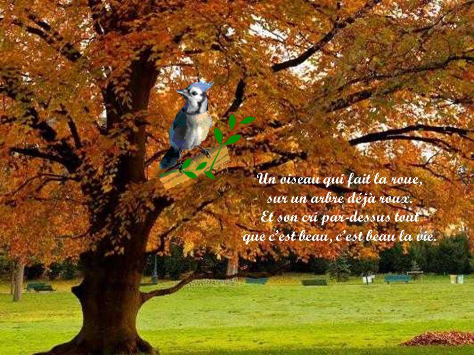 Un oiseau qui fait la roue, sur un arbre déjà roux
