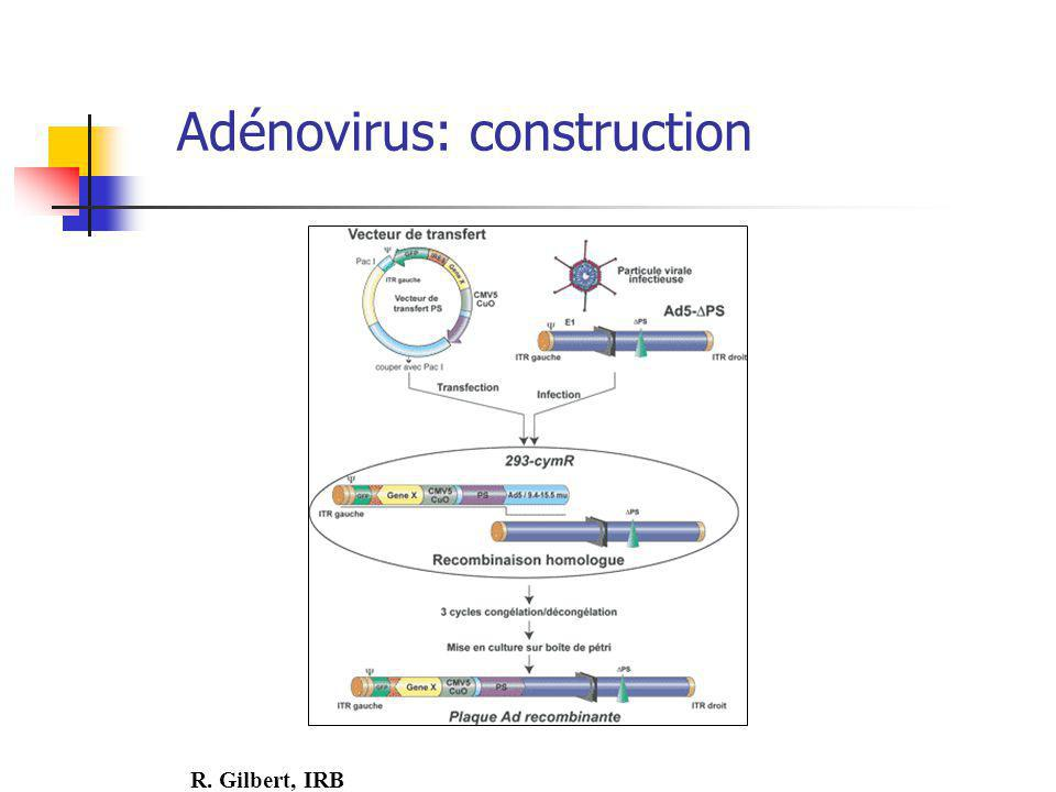 Adénovirus: construction