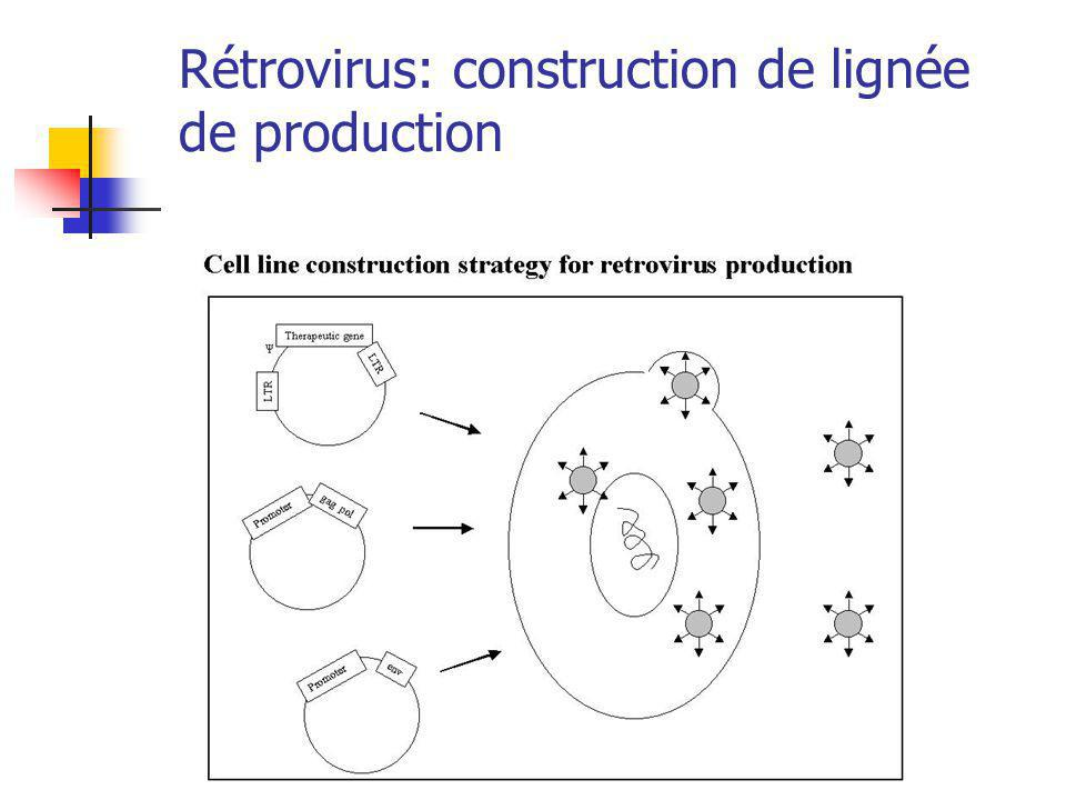 Rétrovirus: construction de lignée de production