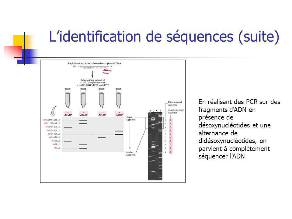 L'identification de séquences (suite)