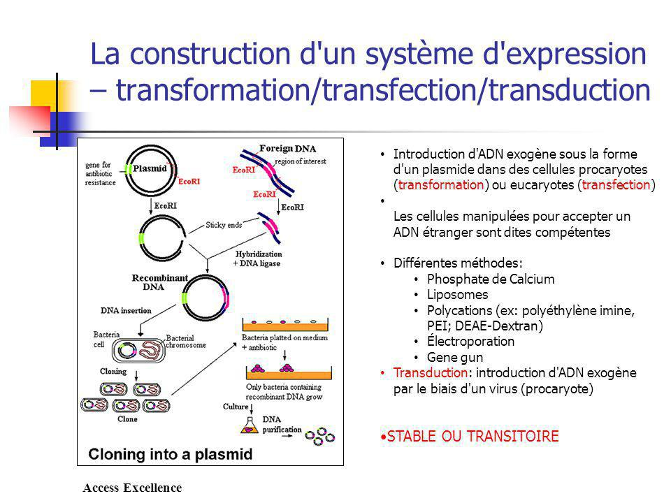 La construction d un système d expression – transformation/transfection/transduction