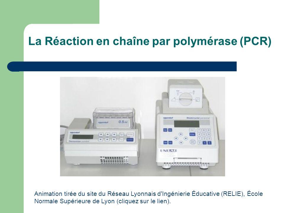 La Réaction en chaîne par polymérase (PCR)
