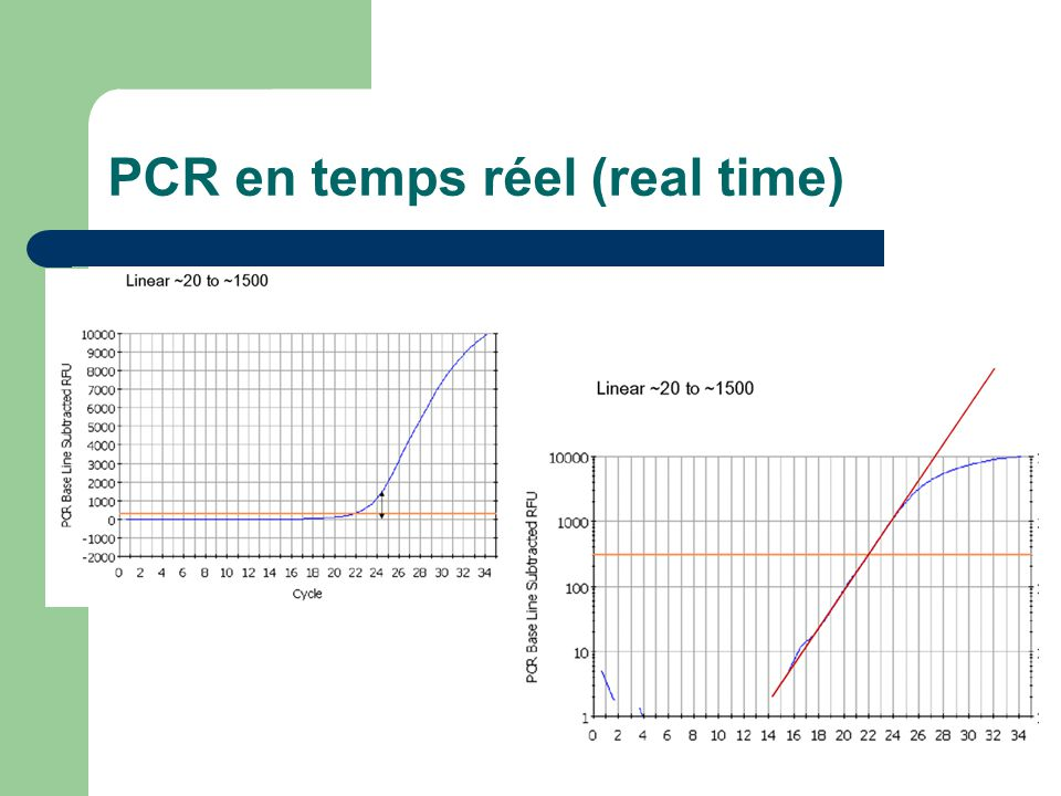 PCR en temps réel (real time)