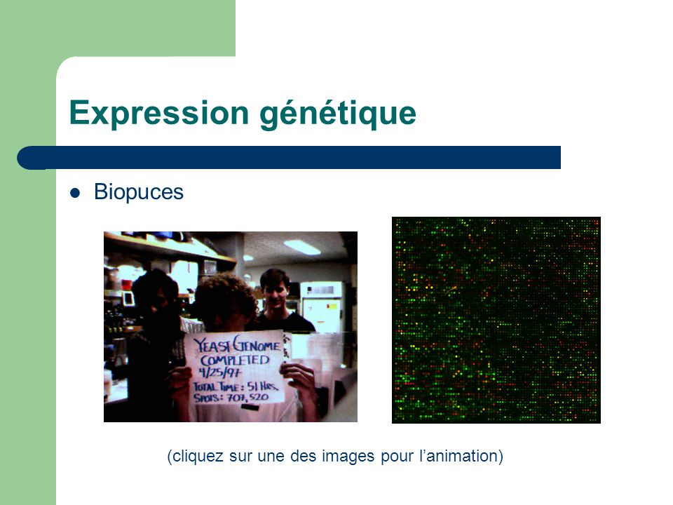Expression génétique Biopuces