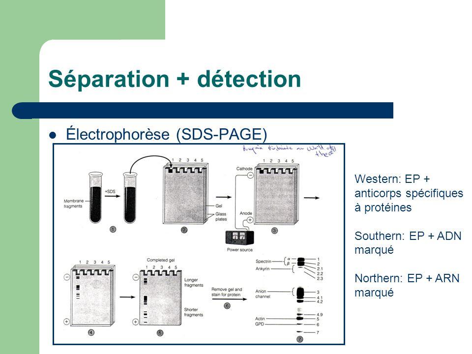 Séparation + détection