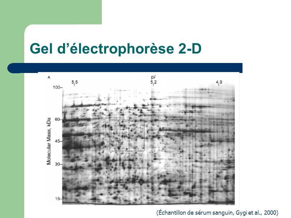 Gel d'électrophorèse 2-D