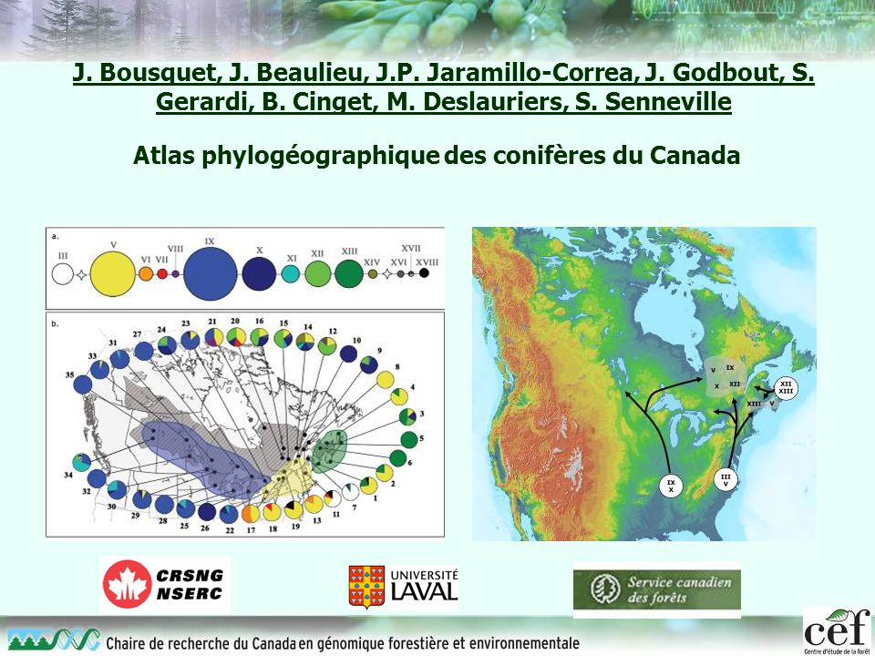 Atlas phylogéographique des conifères du Canada