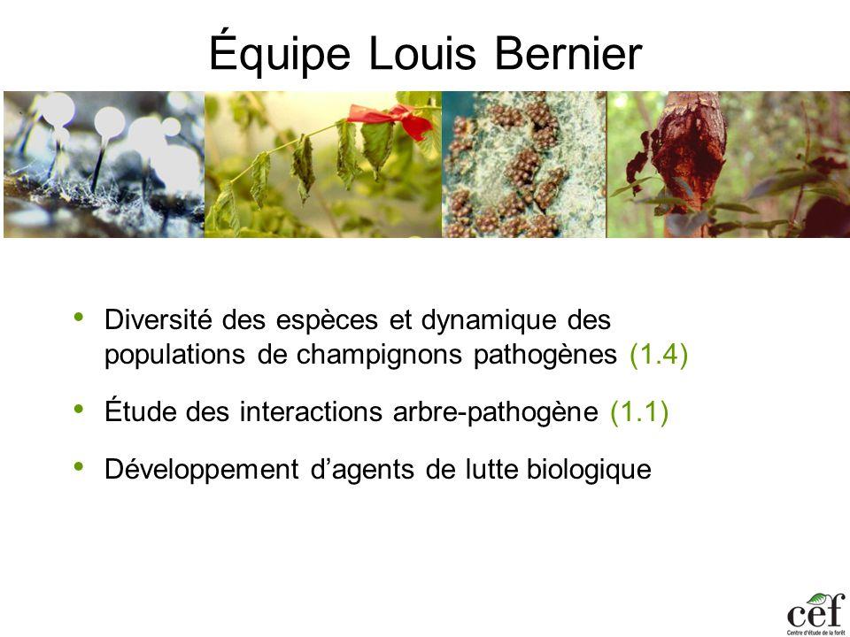 Équipe Louis Bernier Diversité des espèces et dynamique des populations de champignons pathogènes (1.4)