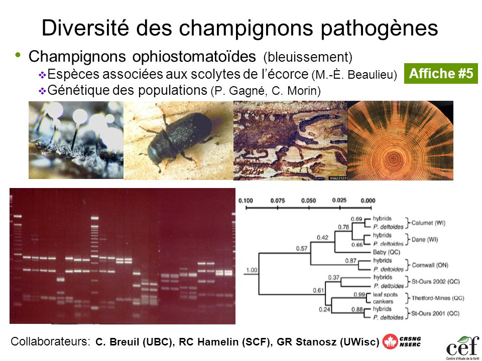 Diversité des champignons pathogènes