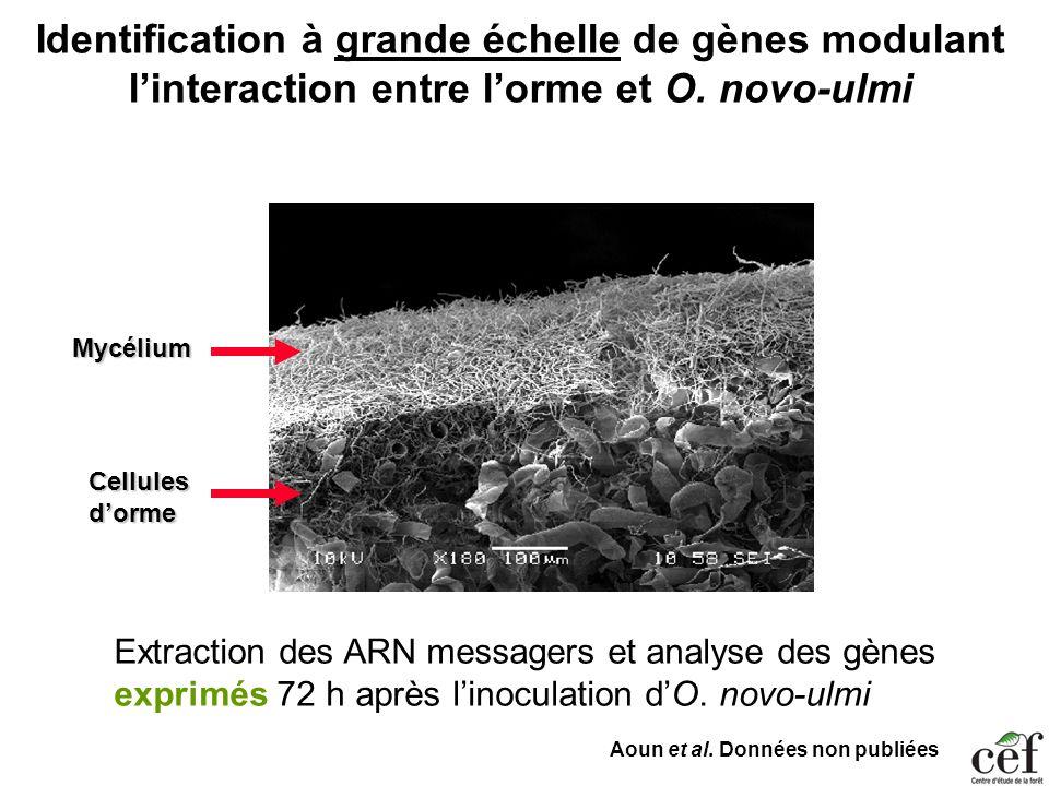 Identification à grande échelle de gènes modulant l'interaction entre l'orme et O. novo-ulmi
