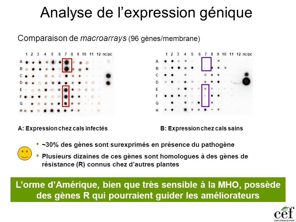 Analyse de l'expression génique