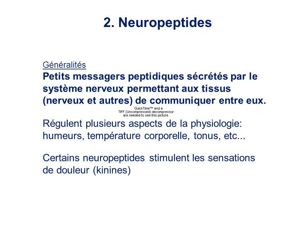2. Neuropeptides Petits messagers peptidiques sécrétés par le