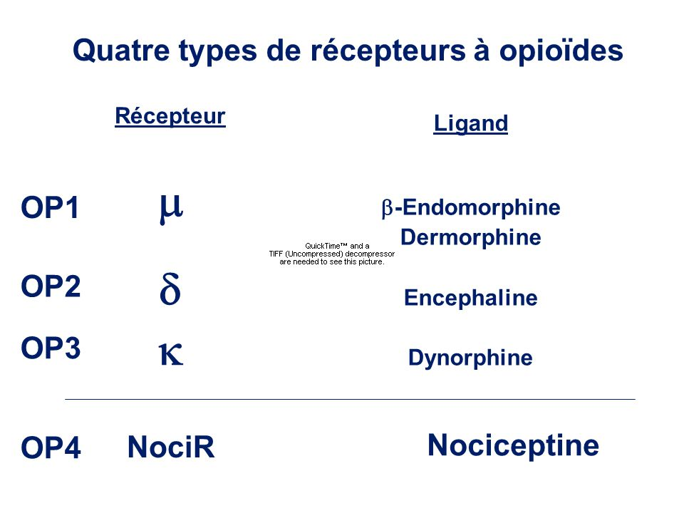 Quatre types de récepteurs à opioïdes