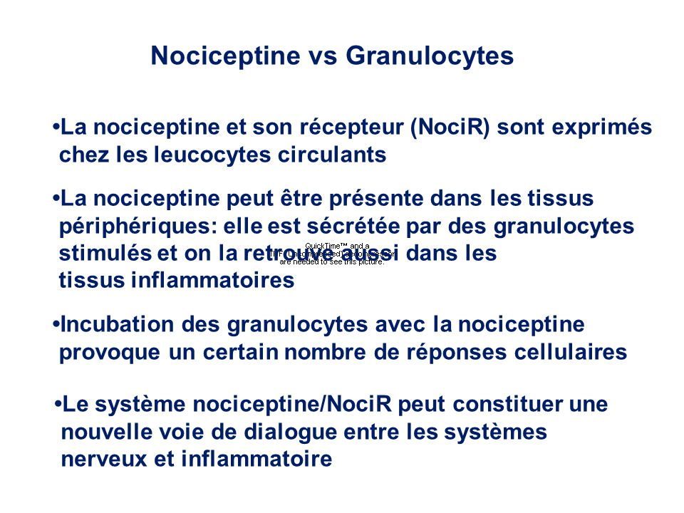 Nociceptine vs Granulocytes