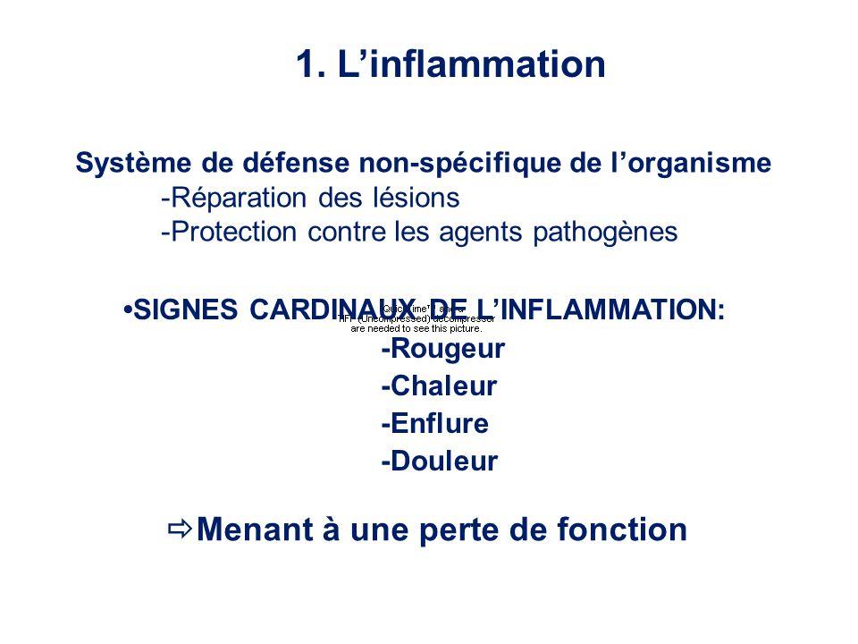 1. L'inflammation Menant à une perte de fonction