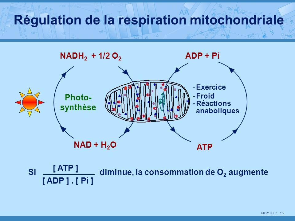 Régulation de la respiration mitochondriale