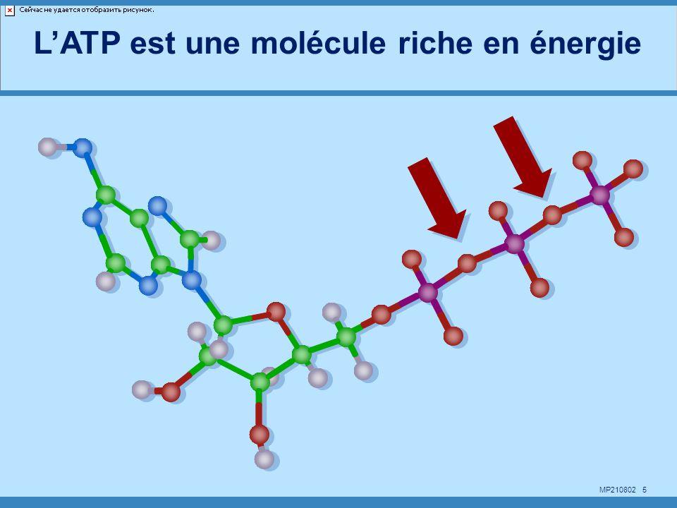 L'ATP est une molécule riche en énergie