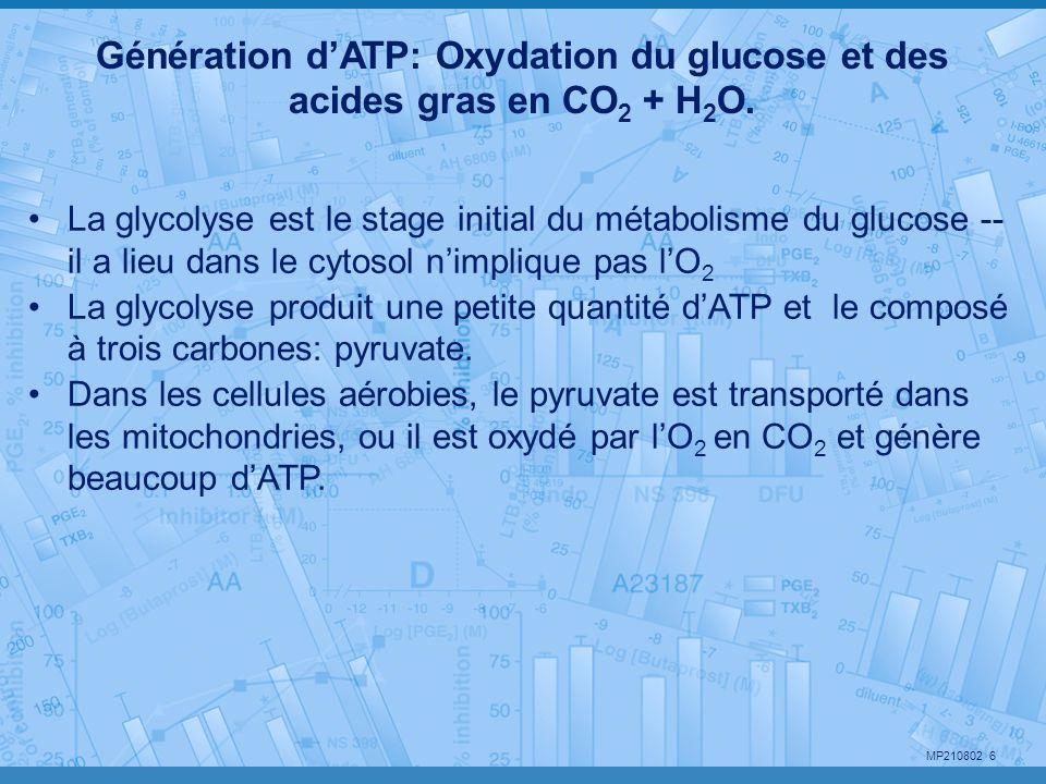 Génération d'ATP: Oxydation du glucose et des acides gras en CO2 + H2O.