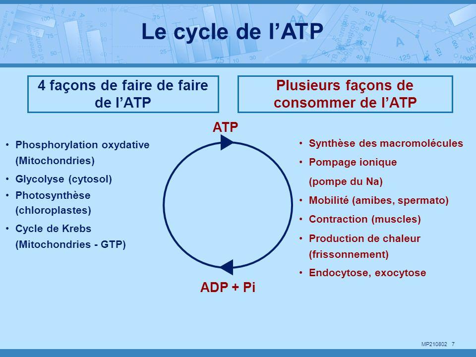 Le cycle de l'ATP 4 façons de faire de faire de l'ATP