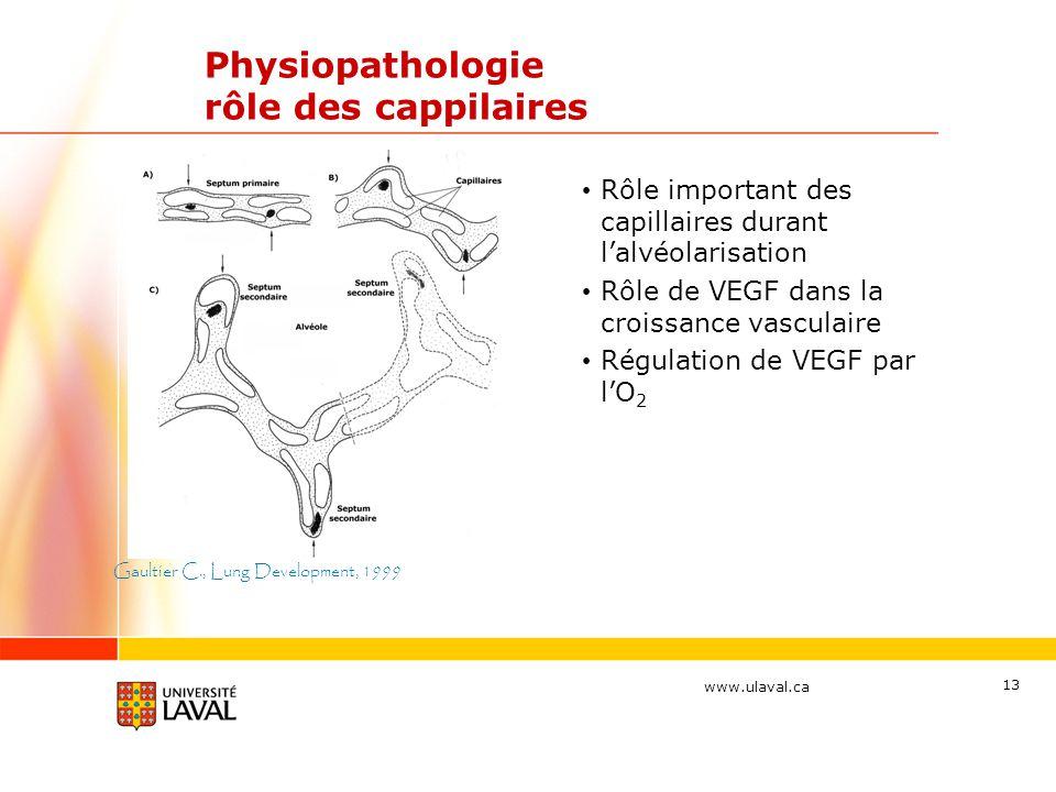 Physiopathologie rôle des cappilaires