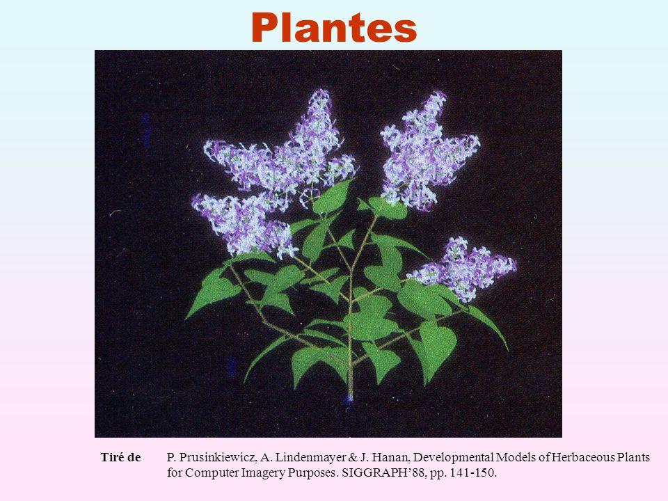 Plantes Tiré de P. Prusinkiewicz, A. Lindenmayer & J. Hanan, Developmental Models of Herbaceous Plants.