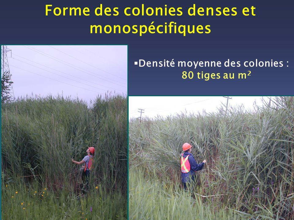 Forme des colonies denses et monospécifiques