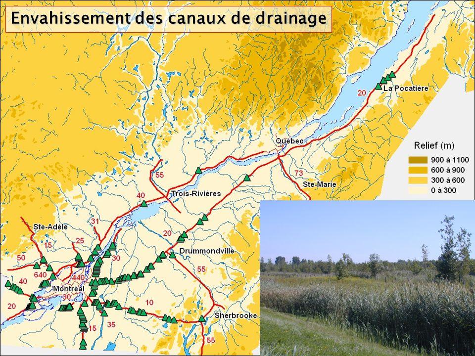 Envahissement des canaux de drainage